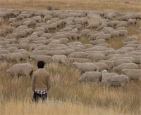 Student's films focus on sheepherders